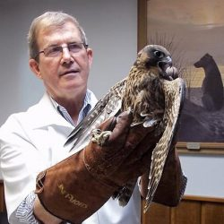 Wildlife_Dr Shipman with falcon