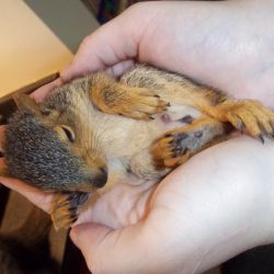 wildlife_baby squirrel